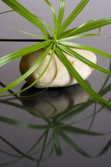Concept zen spa sagesse et détente