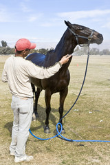 Groom cools off horse after polo chukker