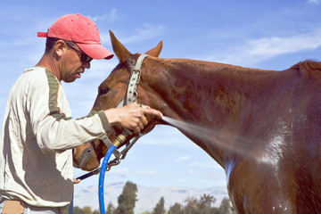 Groom sprays down a horse after a polo chukker