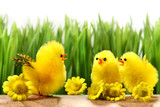 Yellow chicks hiding in the grass with flowers poster