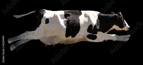 A flying cow isolated on black - 6264414
