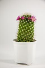 Kleiner grüner Kaktus2