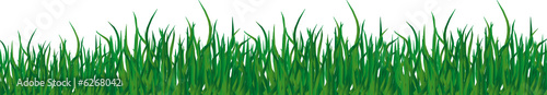 Green grass of different shades on a white background