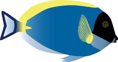 Surgeonfish. Vector