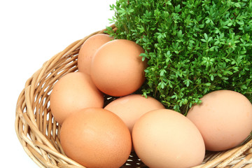 Green spring cress and chicken eggs in a basket. Isolated.