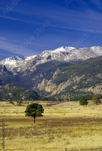 Rocky Mountains with tree in foreground