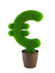 growing euro symbol isolated on white background