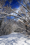Recreational path in winter forest after a snowfall poster