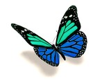 Fototapety 3D turquoise and blue butterfly
