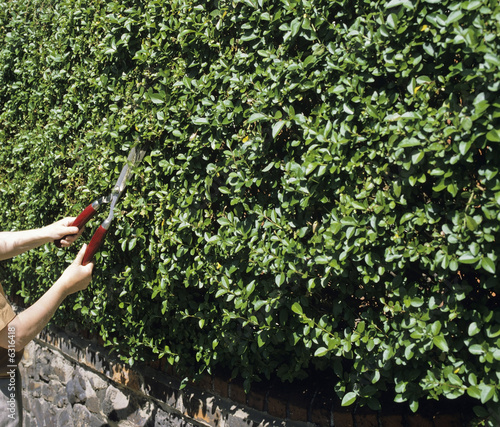 A woman cutting a hedge with shears.