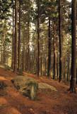 gwydyr forest snowdonia wales poster