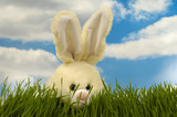 Easter bunny is hiding in the green grass.  poster