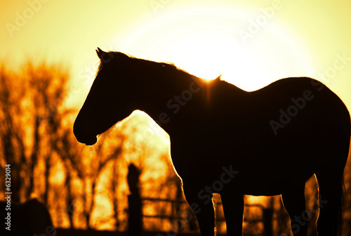 horse silhouetted at sunset.
