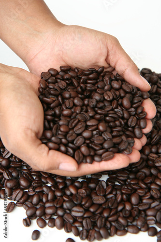 A mixture of coffee benans being picked up