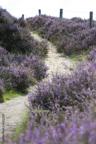 Path leading up through the heather, focus on the 2nd part .