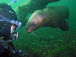 Scuba Diver Meets California Sea Lion