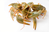 alive crawfishes isolated on a white poster