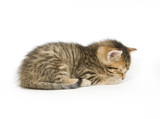 A tabby kitten lays down for a nap on a white background poster