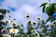 Frühling Bumenwiese