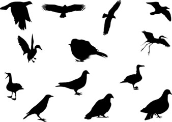 Wildlife bird silhouettes set