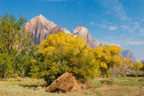 Fall season foliage in Zion National Park poster