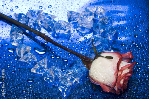 heart from ice with rose on blue background