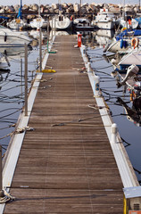 Rows of sailboats docked in harbor