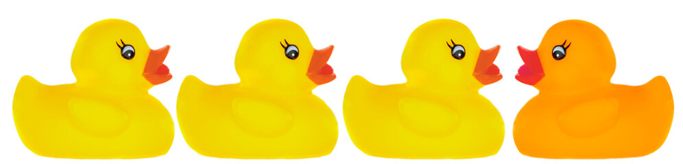 Yellow plastic ducks and one orange a over white background