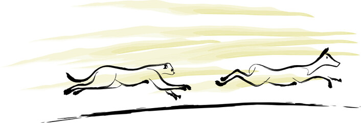 Wild cat chase