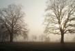 bäume im morgennebel