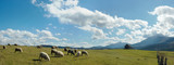 Sheep herd on mountain plateau pasture (Carpathian, Ukraine). poster