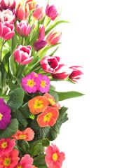 Floral tulip and primrose border