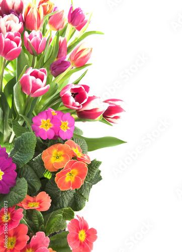 Foto op Plexiglas Tulp Floral tulip and primrose border