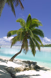 Tropical Dream Beach Paradise of the South Pacific - 6416095