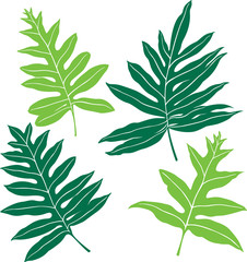 Hawaiian Ferns