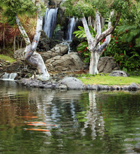 Waterfall and koi pond in japanese garden