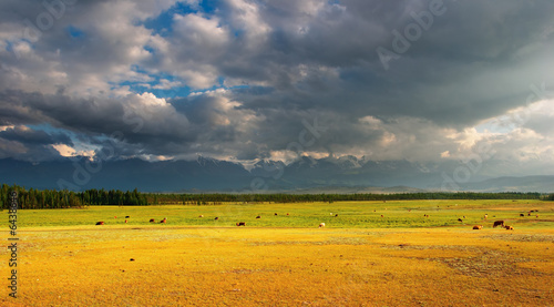 Fotobehang Landscape with grassland and cloudy sky