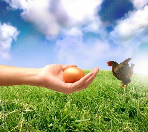 uovo&gallina