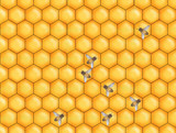 hoey bee comb poster