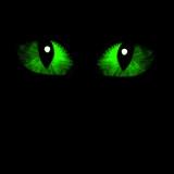 Two feline eyes poster