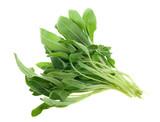 fresh common sage herb poster