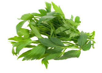 fresh lovage herb