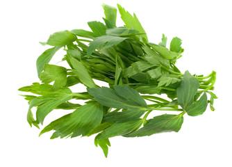 fresh lovage herb