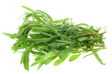 fresh tarragon herb
