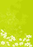 Fototapety vecteur série - fleur marguerite - paysage de printemps et été