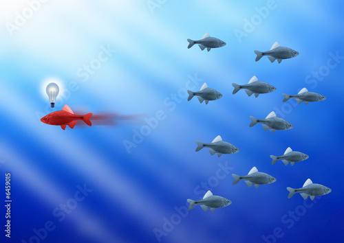Fototapete Fisch - Goldfisch - Poster - Aufkleber