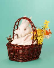 Rabbit in baskett