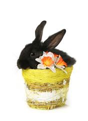 black rabbit in basket