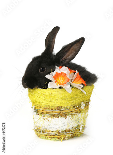 black rabbit in basket