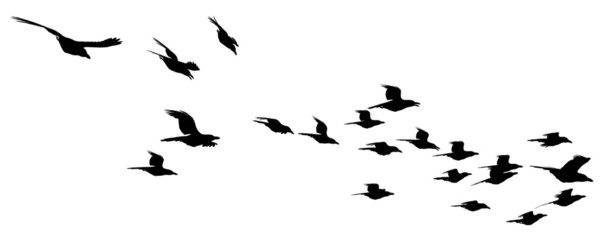 Flying fock of birds